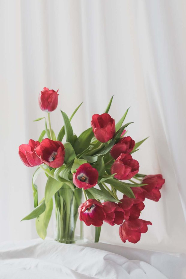 angies-red-tulips