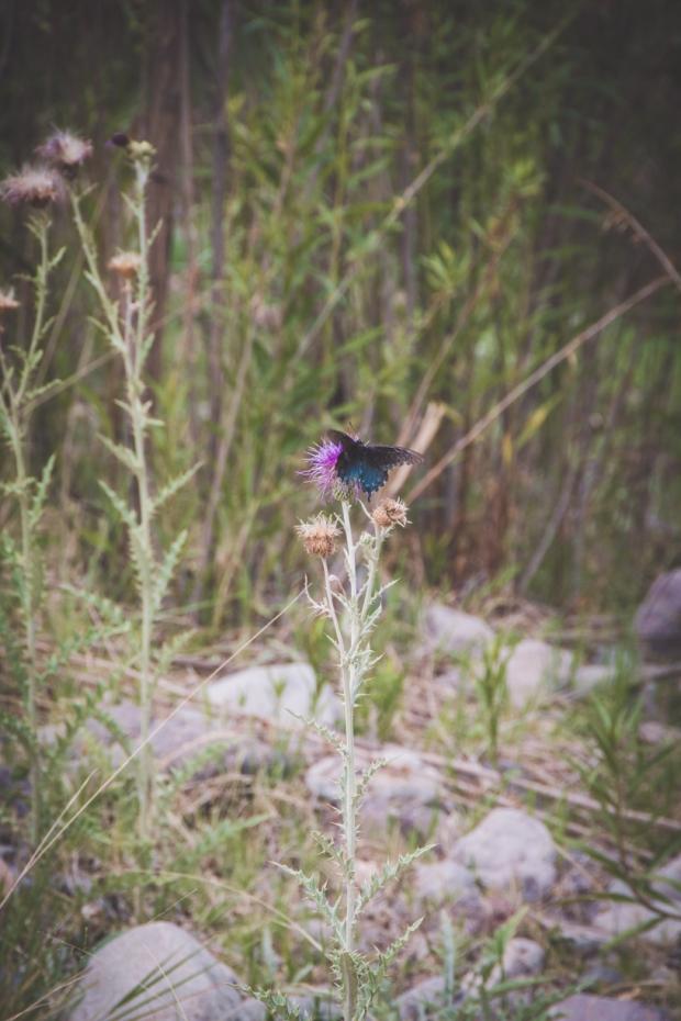 187.365.2018 Pollinators