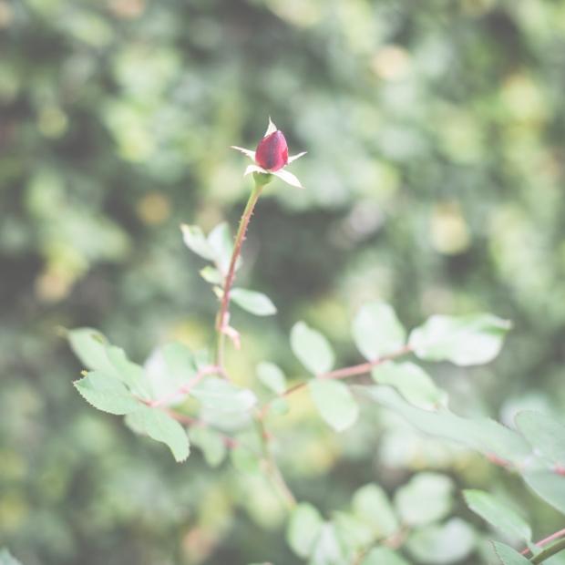 flowers-54