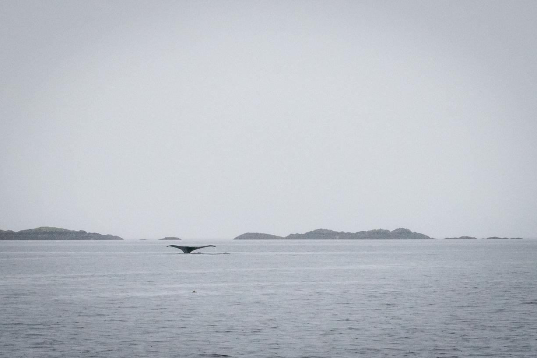 Alaska fishing-267